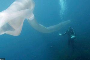 Thót tim cảnh thợ lặn đối mặt giun biển dài hơn 8m giữa đại dương