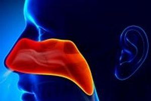 Lý giải được cách mũi chống vi khuẩn thâm nhập vào cơ thể