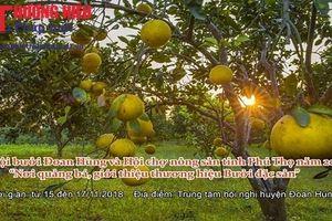Phú Thọ: Tổ chức lễ hội Bưởi Đoan Hùng và Hội chợ nông sản
