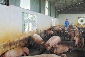 Hà Nội có 80 chuỗi liên kết nông sản an toàn từ sản xuất đến tiêu thụ