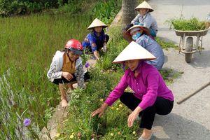 Rực rỡ đường hoa ở Ứng Hòa
