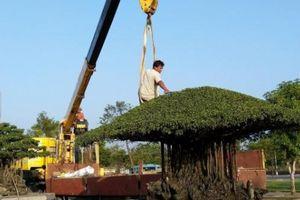 Tại triển lãm này, sẽ có nhiều cây bonsai, chim cảnh 'độc, lạ', hiếm có, khó tìm