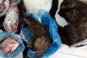 Chủ tịch Hội chữ thập đỏ xã bị phạt vì buôn bán động vật hoang dã