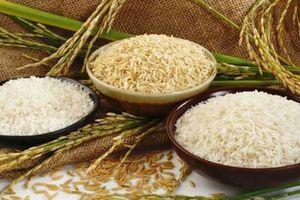 Gạo hữu cơ Việt sẽ có mặt tại New Zealand vào năm 2019
