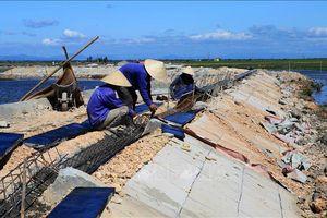 Chủ động chống hạn hán, thiếu nước, xâm nhập mặn mùa khô