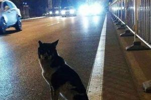 Chú chó trung thành đứng đợi chủ 80 ngày giữa đường phố đông đúc