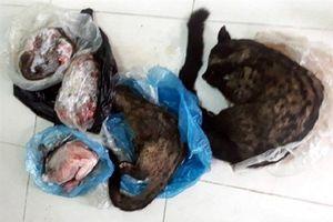 Nghệ An: Bắt nữ cán bộ xã bán động vật hoang dã trái phép