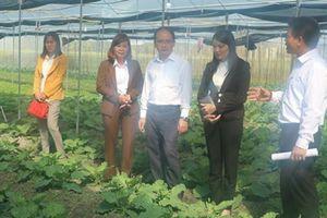 Thái Nguyên: Sản xuất rau an toàn theo công nghệ mới