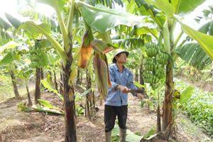 HLV huyện Kiến Xương: Khuyến khích hội viên xây dựng vườn mẫu