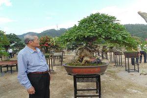 Chiêm ngưỡng triển lãm bonsai, chim cảnh 'độc, lạ', hiếm có, khó tìm