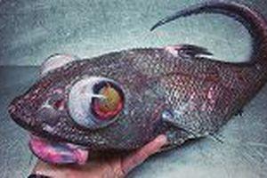 Loại vật 'bí ẩn' tung cú đấm khiến cả đại dương khiếp sợ