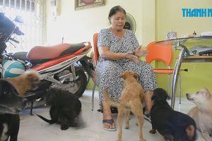 Người phụ nữ cưu mang hàng chục con chó hoang