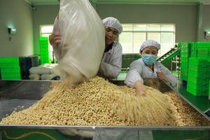 Xuất khẩu hạt điều sang Thái tăng 126%