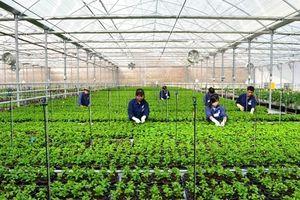 MrFarm mini: Giải pháp giải pháp công nghệ mang cả nông trại vào túi của người sản xuất