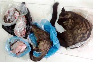 Nữ Chủ tịch Hội chữ thập đỏ lên Facebook rao bán động vật hoang dã