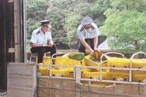 Lạng Sơn: Nông sản xuất khẩu gặp khó vì truy xuất nguồn gốc