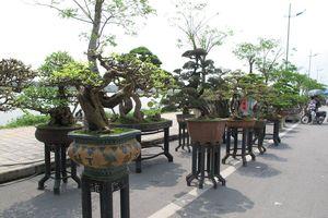 Hà Nội: Công nhận điểm du lịch làng nghề Sinh Vật Cảnh đầu tiên
