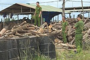Đắk Lắk: Lò than chứa gỗ không rõ nguồn gốc