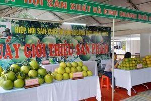 Phú Thọ: Tưng bừng tổ chức lễ hội bưởi Đoan Hùng và hội chợ nông sản