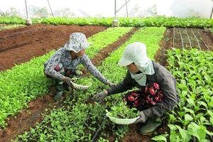 Sản phẩm nông nghiệp Việt vì sao chưa được đăng ký bảo hộ?