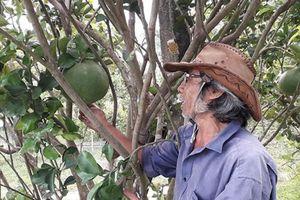 Quảng Nam: Lão nghệ nhân làm kinh tế vườn giỏi
