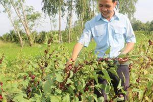 Trai 'gàn dở' trồng cây ra trái đỏ tươi, thế mà lại ăn nên làm ra