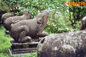 Tận mục bộ 10 linh thú nghìn tuổi quý giá nhất Việt Nam