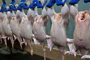Việt Nam trở thành thị trường tiềm năng cho xuất khẩu gia cầm Ba Lan