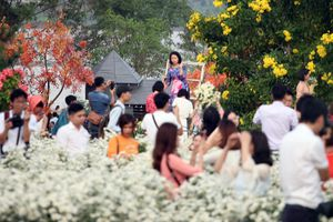 Biển người chen chân chụp ảnh, vườn cúc họa mi ở Hà Nội 'thất thủ' dịp cuối tuần
