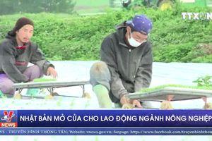 Nhật Bản mở cửa cho lao động ngành nông nghiệp
