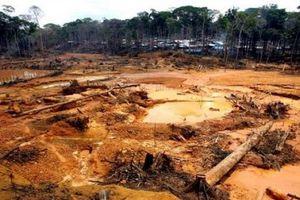 Gần 32.000ha rừng Amazon đã bị mất