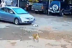 Chó cưng bị ô tô đâm chết, chủ nhân chia sẻ clip lên mạng bóc phốt nhưng 'đời không như là mơ'