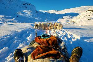 Cuộc đi săn hải cẩu bằng xe chó kéo với dân bản địa Greenland