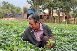 Giúp nông dân phát triển các mô hình kinh tế hiệu quả