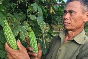 Có của ăn của để nhờ liên kết với doanh nghiệp trồng rau VietGAP