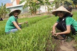 Mướt mắt với 'vườn rau 4.0' của học trò Cần Đước