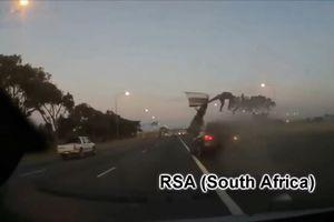 Đây là lý do bạn nên thắt dây an toàn khi ngồi trên ôtô