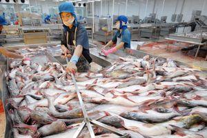 Xuất khẩu cá tra sang Trung Quốc tăng trở lại