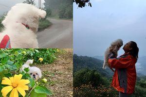 Mặc kệ người khác nhìn lạ lùng, cô gái 9X vẫn thường xuyên cho cún cưng đi du lịch cùng