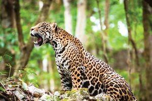 Mỹ Latinh đứng đầu thế giới về tổn thất đa dạng sinh học do con người