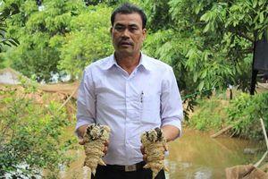 Dàn chân gà Đông Tảo 'khủng' ngâm rượu của 'dân chơi Việt'