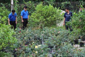 Phú Lương - Thái Nguyên: Đoàn viên, thanh niên là hạt nhân trong xây dựng NTM