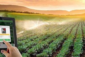 Nông nghiệp 4.0- từ chuyện 'trông trời' đến cảm biến nhà kính