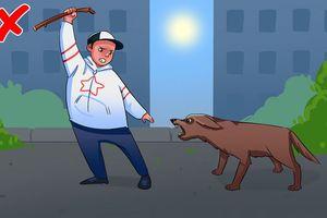 Từ vụ chó Bull cắn người: Làm gì khi bị chó tấn công?