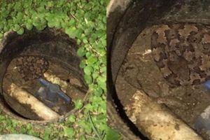 Run rẩy phát hiện rắn cực độc trong vườn