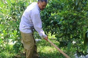 Chiềng Ngần đẩy mạnh phát triển kinh tế trang trại bền vững