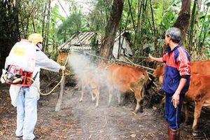 Quảng Trị công bố dịch lở mồm long móng trên gia súc