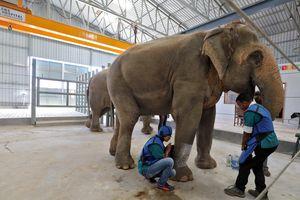 Bệnh viện cho voi đầu tiên ở Ấn Độ