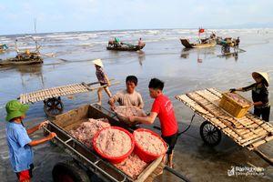 Mùa này, cứ 'vác cào' ra biển, ngư dân Nghệ An bội thu ruốc biển