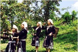 Tuyên Quang: Gần ba năm thực hiện các Nghị quyết Đại hội Đảng của Na Hang- Bài 2: Phát triển nông nghiệp hàng hóa